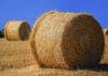 Skuteczne zabiegi herbicydowe: kukurydza